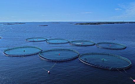 Eduskuntavaaliehdokaskysely: Kotimainen kalankasvatus