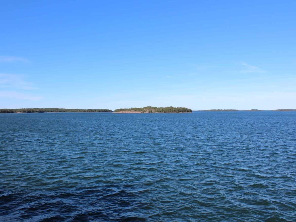 Voit syödä Itämeren sinileväongelmaa pienemmäksi